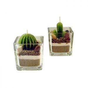 свещ кактус в стъкло